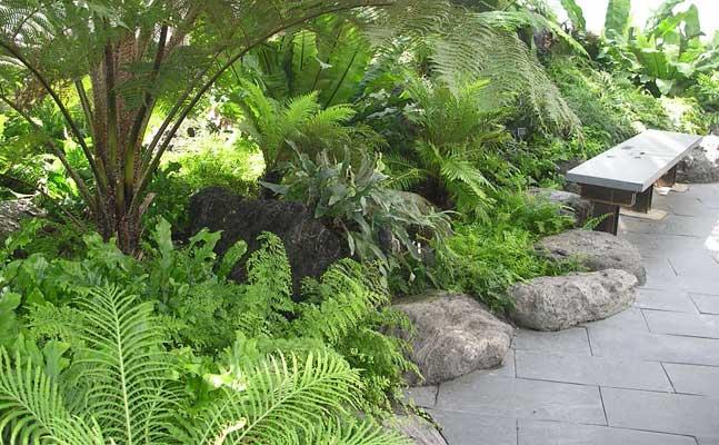 Fern Room   Como Park Zoo And Conservatory Como Park Zoo And Conservatory