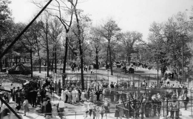 an undated black and white photograph that shows three large metal enclosures in a grove with lots of people milling around and looking. It's not possible to tell what's in the cages.