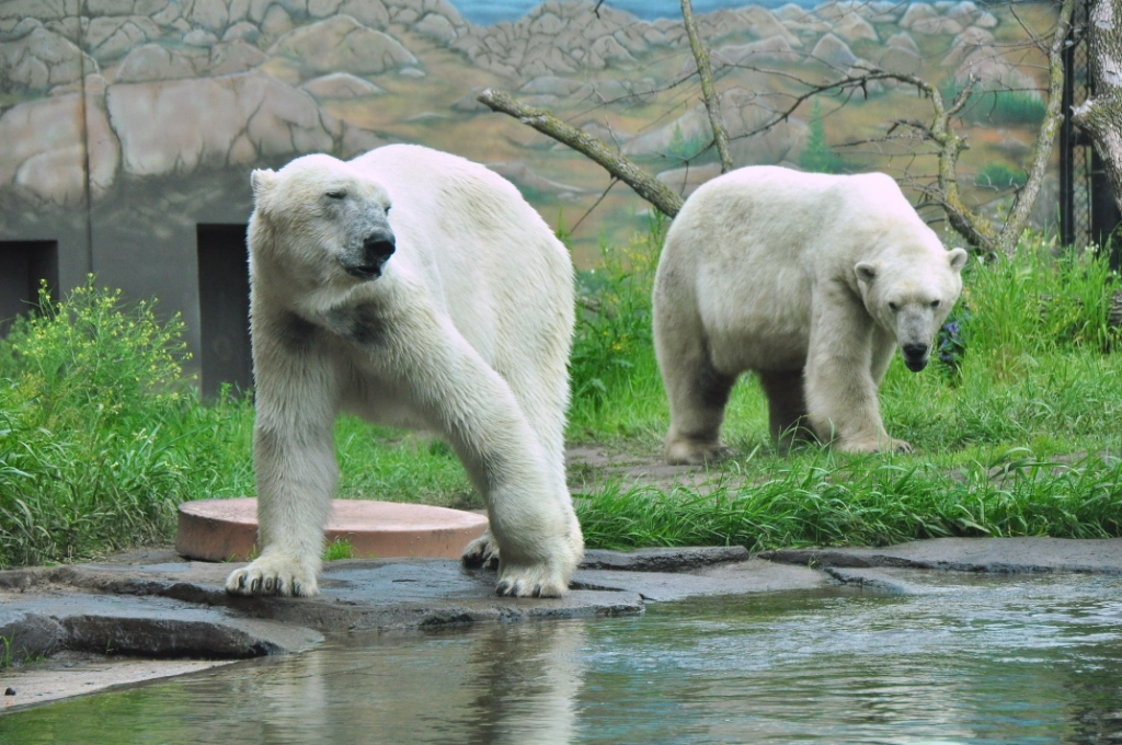 Info  Polar Bear Odyss...