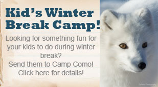 Kid's Winter Break Camp