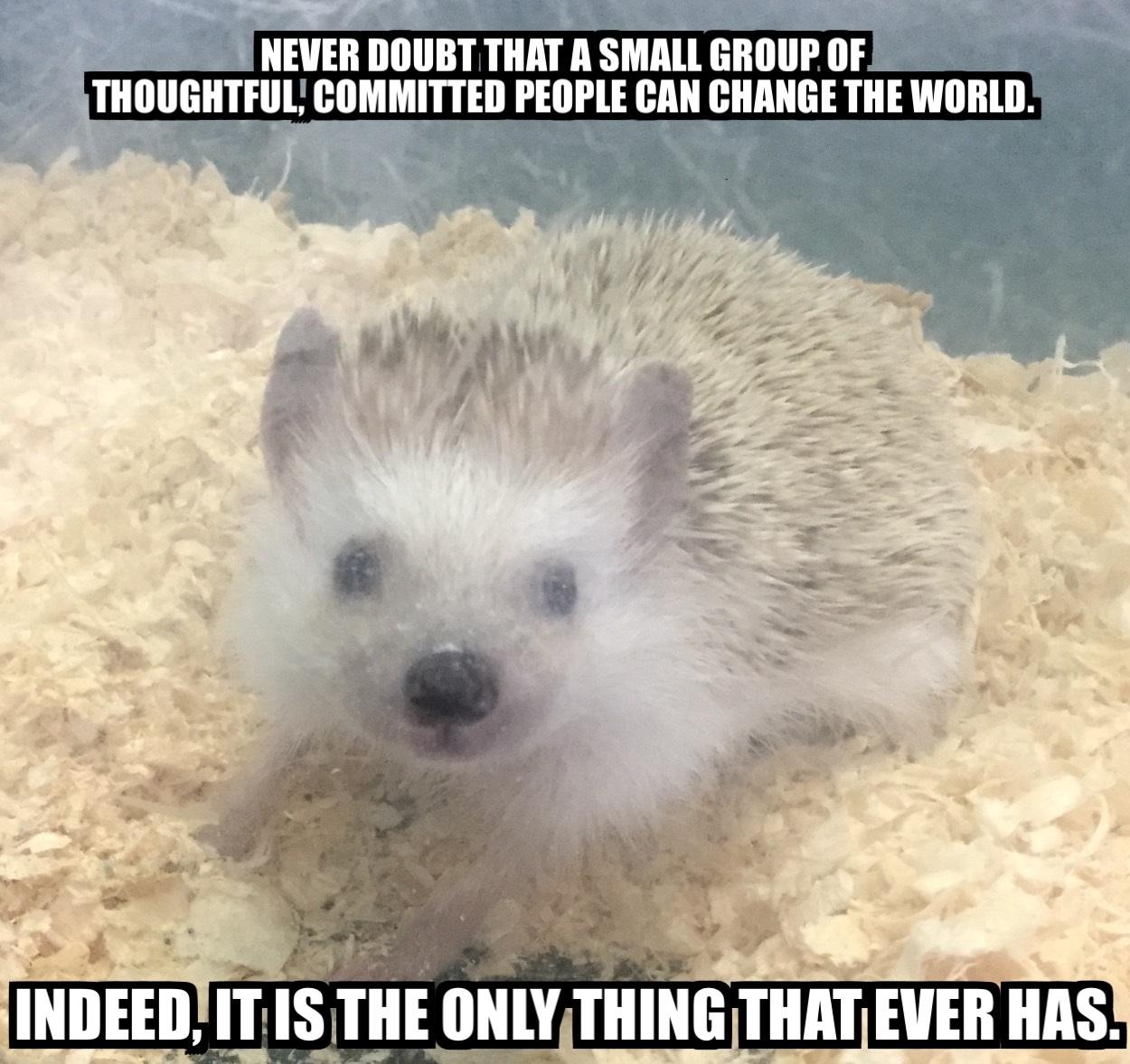 haleys-conservation-meme