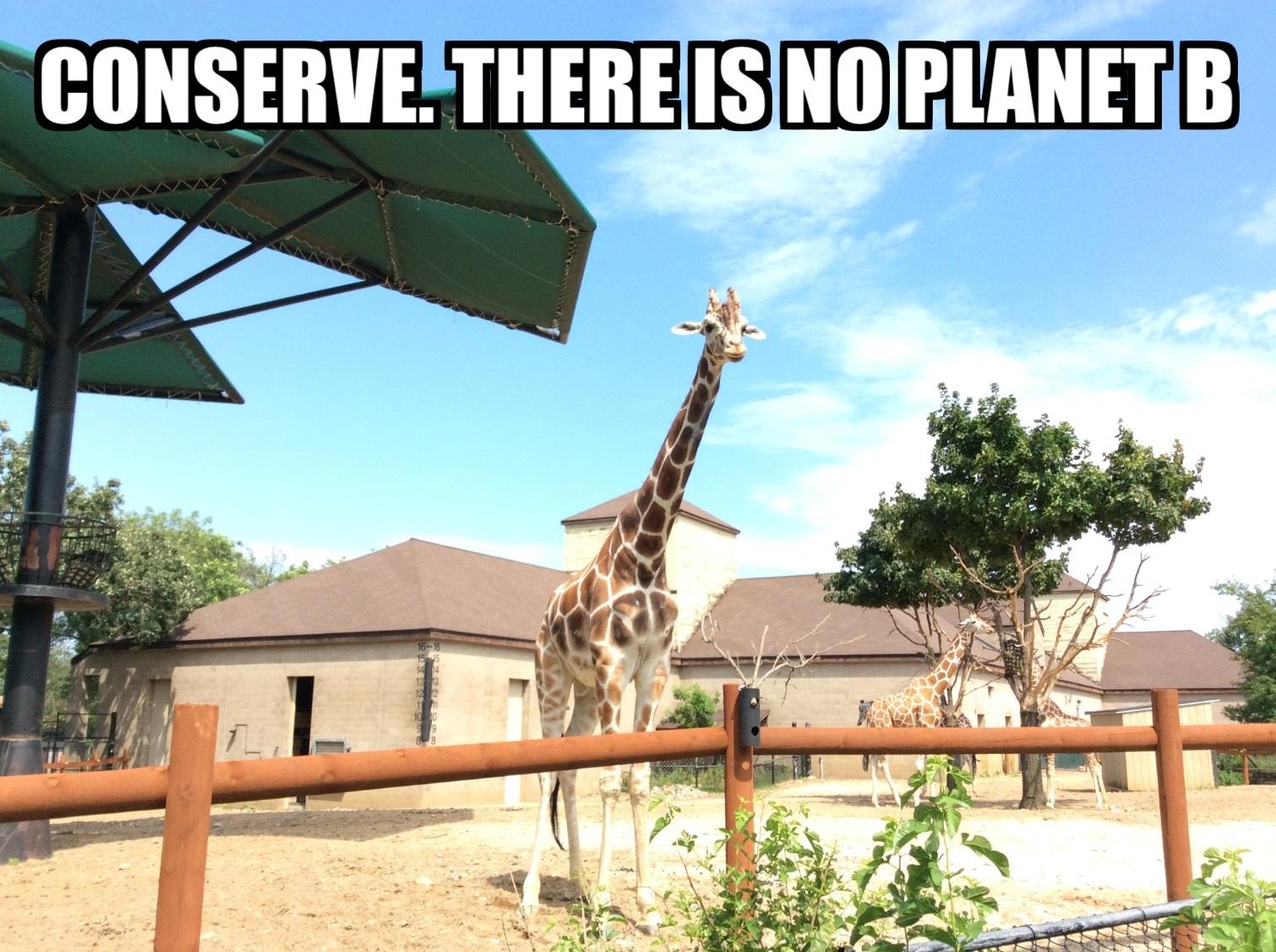 isabels-conservation-meme