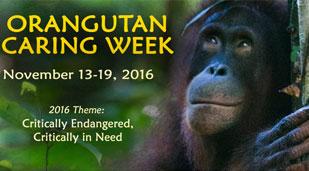 2016 Orangutan Caring Week