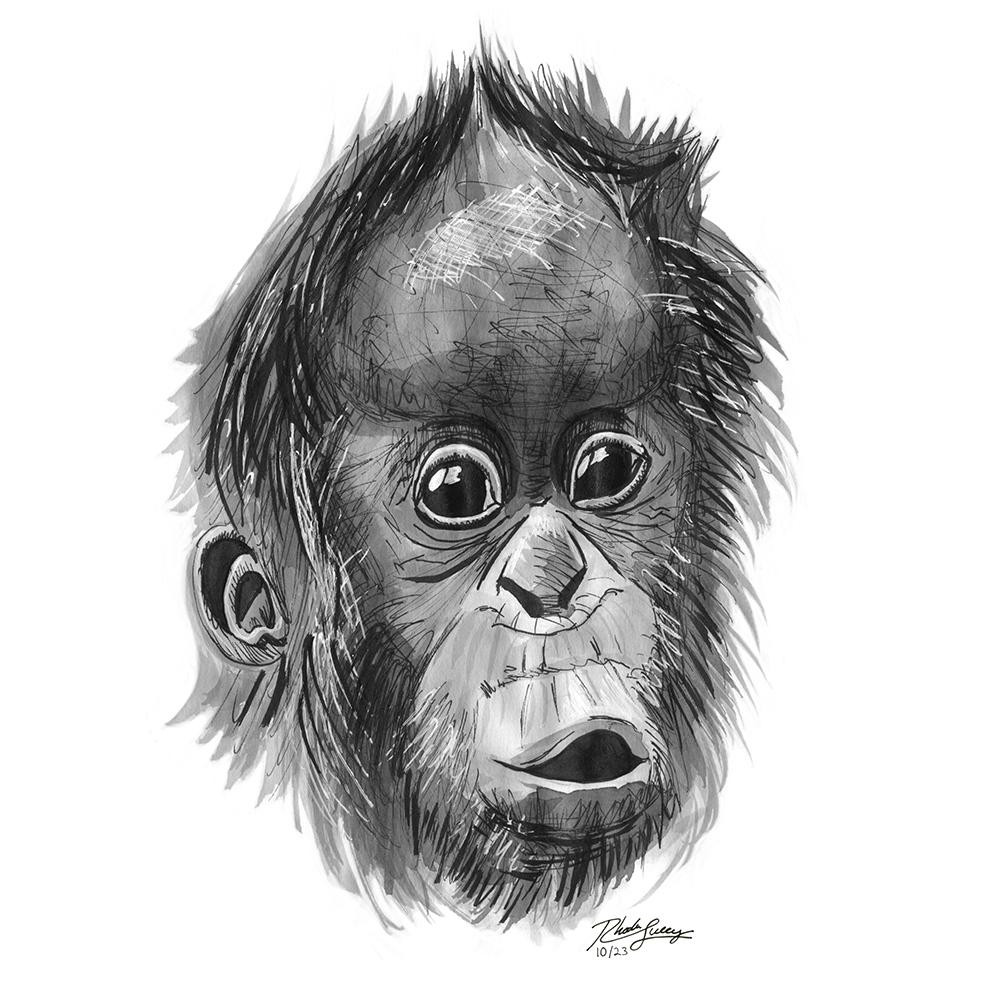 rhodalucey_orangutan